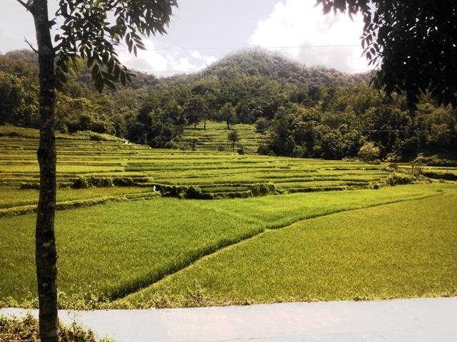Kawasan persawahan menyatu dengan perbukitan di Bulu Tellue. (foto: mfaridwm)