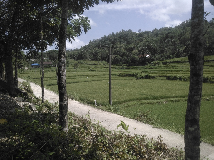 Infrastuktur jalan desa dan kawasan persawahan di Bulu Tellue. (foto: mfaridwm)