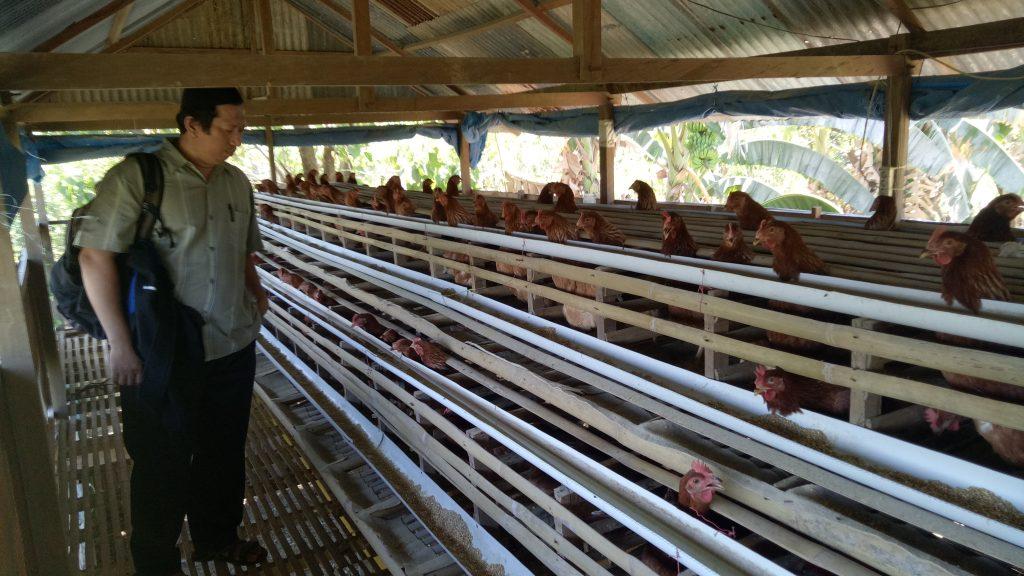Hasil Program Penguatan Kelompok Usaha Ayam Petelur. (foto: basri)