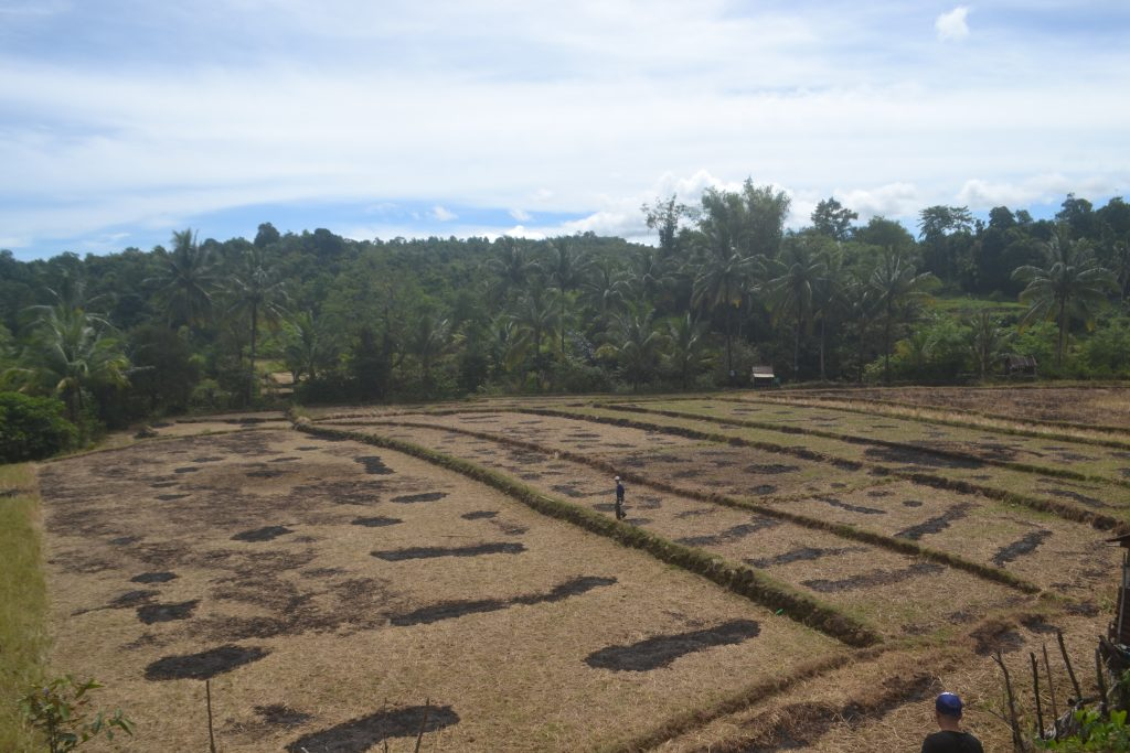 Salah satu sisi kawasan pertanian di Desa Tondongkura. (foto: mfaridwm/palontaraq)