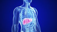 human liver (sumber foto: tgp.com.ph)