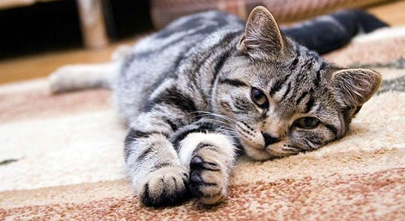 foto: catlovers.id