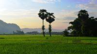 Hamparan persawahan di Biraeng, Minasatene-Pangkep. (foto: mfaridwm/palontaraq)