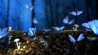 Butterfly Effect. (foto: ist/palontaraq)