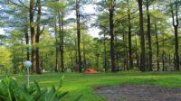 Hutan Pinus Malino. (foto: ist/palontaraq)