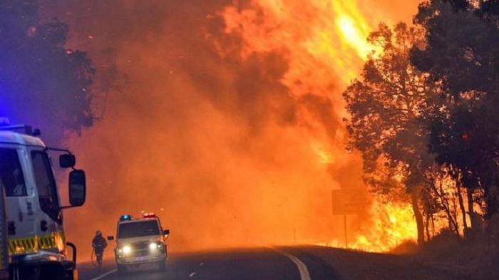 Kebakaran Hutan di Australia sebabkan banyak satwa langka mati. (foto: ist/palontaraq)
